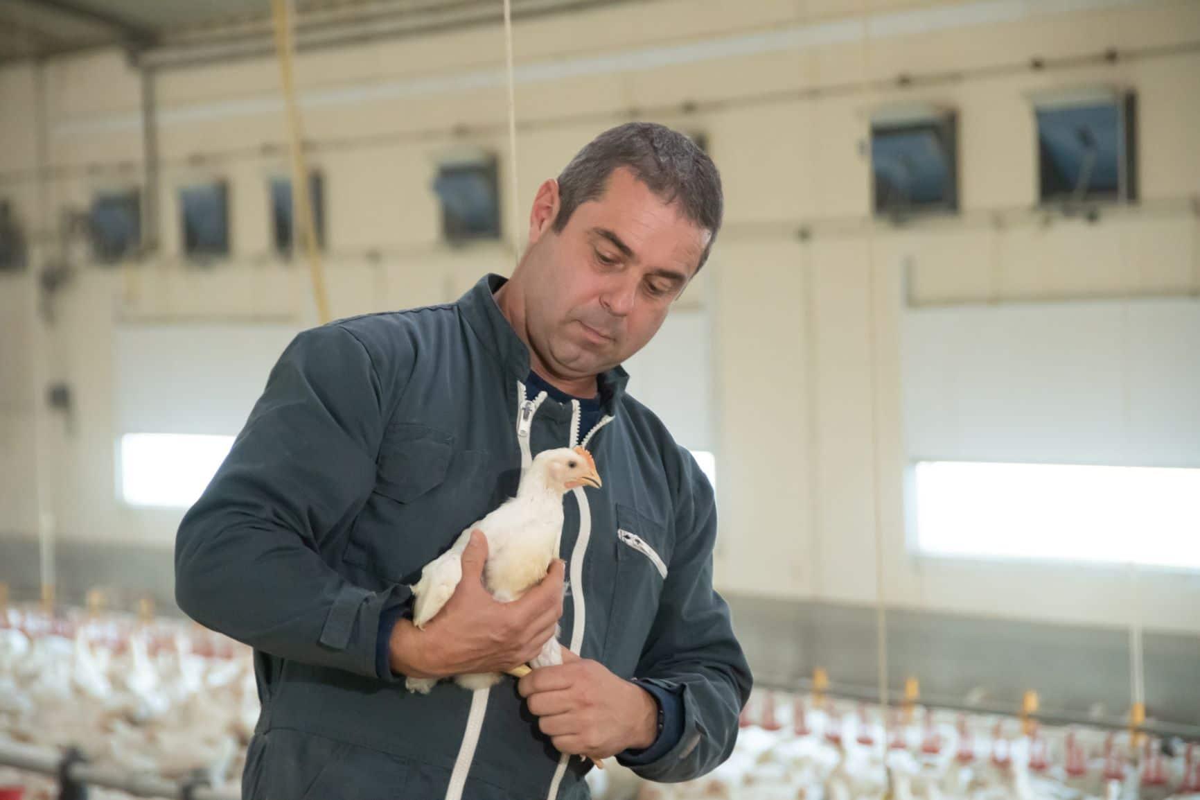 les éleveurs de volaille travaillent dans le respect de l'environnement et du bien-être animal.